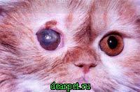 фото болезнь глаз у кошек