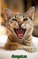 Неприятно пахнет изо рта у кошки ...