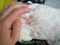 Выпадение волос у собаки